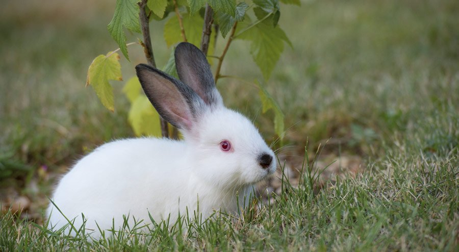Are Rabbits Nocturnal and Other Facts About Them